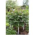 Садовый декор: держатели опоры для цветов, кустов, садовых растений